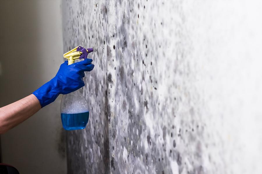 Schimmel von Wand entfernen